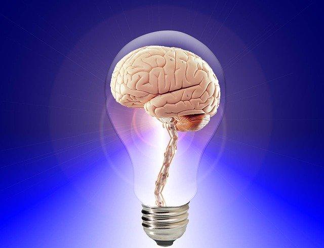 brain-20424_640 (1)