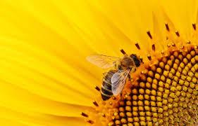 abejas003