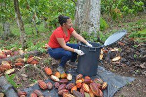 En cacao también hay ejemplos de que se puede cambiar.