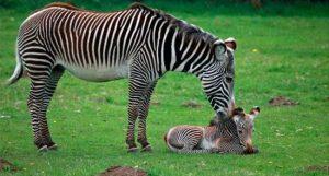 Animales-salvajes-1-e1468190663950