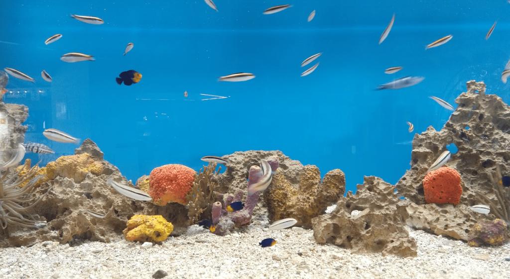 Sea Aquarium Curazao.