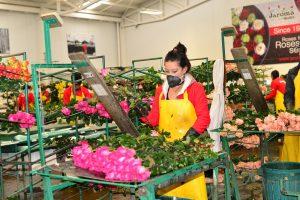 La floricultura colombiana genera cerca de 140.000 empleos formales con todos los beneficios de ley.