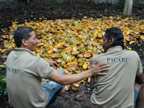 agricultores cacao ok