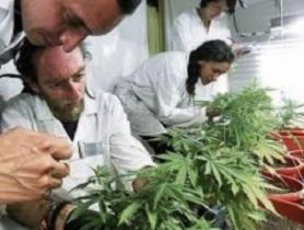 Ciencia y Marihuana